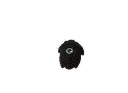 1316986711_trilobit1.jpg